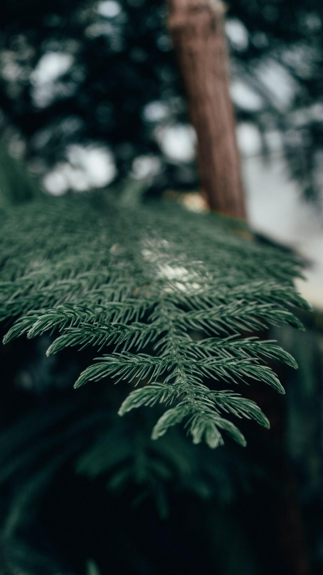 PASSIVE GREENHOUSE